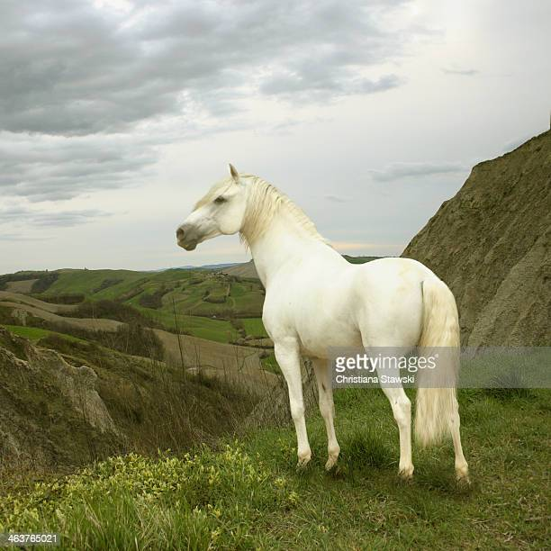 White horse standing on edge of cliff