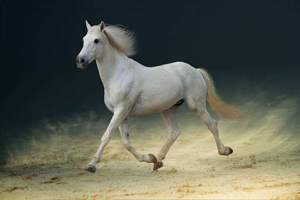 White Horse Trotting On Sand Wall Art