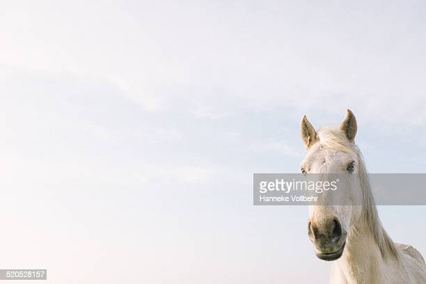 White horse with sky