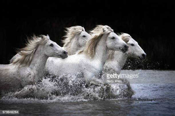 171 White Horse Black Background Photos And Premium High Res Pictures Getty Images