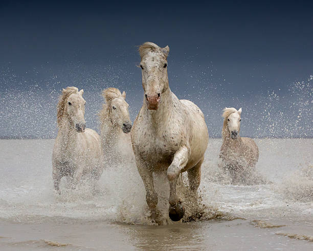 White Horses Of The Camargue On A Stormy Day Wall Art