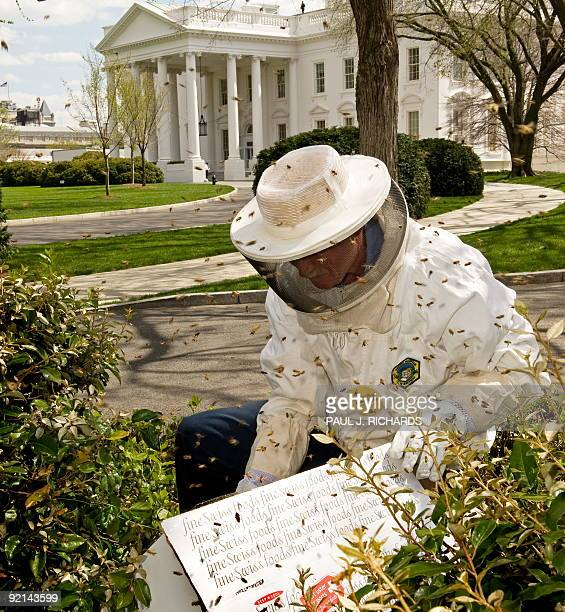 White House carpenter Charles Brandts who is also a beekeeper lends his skills to the White House after a swarm of Honey Bees nested near one of the...
