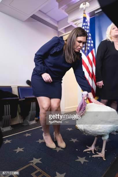 White House Press Secretary Sarah Sanders pets Wishbone one of the turkeys who may be pardoned by President Donald Trump in the James S Brady Press...