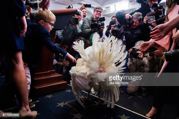 White House Press Secretary Sarah Sanders' son Huck reaches out to pet tobepardoned Thanksgiving turkey Wishbone in the press briefing room of the...