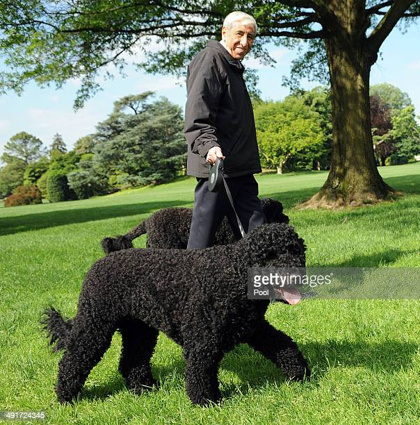 White House staffer walks Sunny and Bo the Obama family dogs on the South Lawn of the White House on May 17 2014 in Washington DC Bo arrived at the...