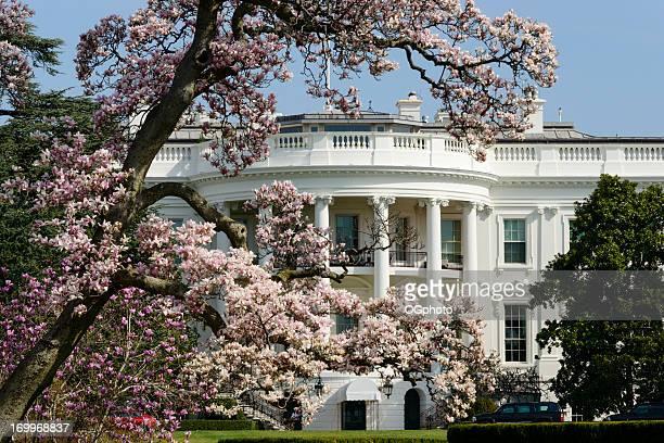nosotros casa blanca con cornejo árbol de magnolia de washington dc - ogphoto fotografías e imágenes de stock