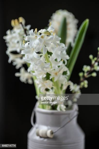 white hyacinths in a jug - weiß stock pictures, royalty-free photos & images