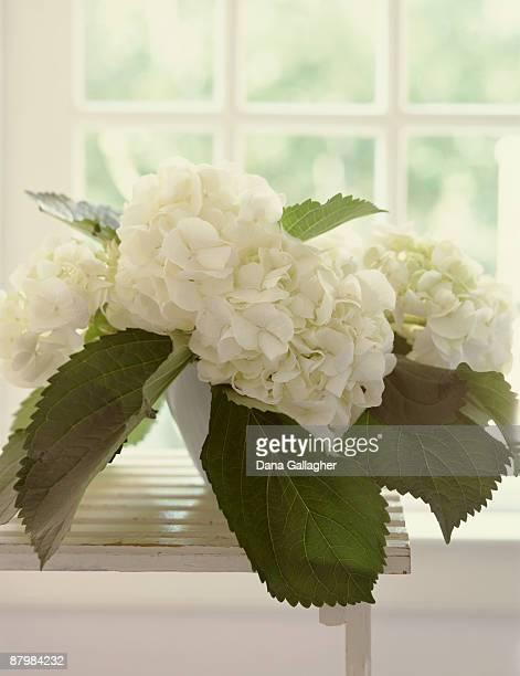 white hydrangea still life - dana white stock pictures, royalty-free photos & images