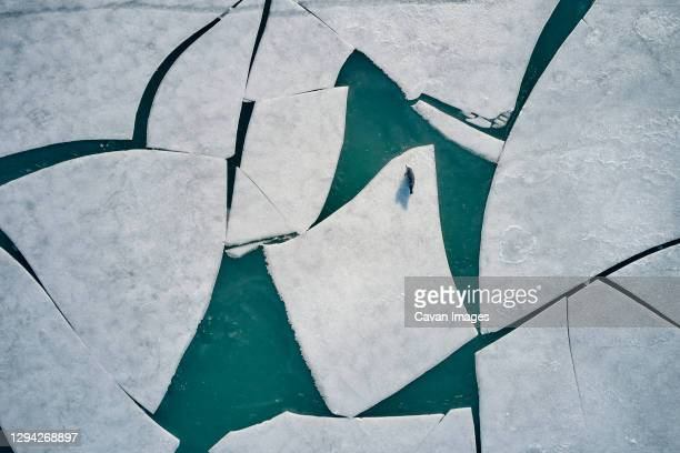 white ice floes with seal - iceberg ice formation stock pictures, royalty-free photos & images