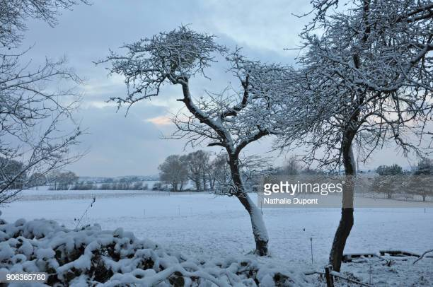 White landscape, contryside under the snow
