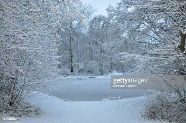 White landscape, snowy pond in the countryside under the snow