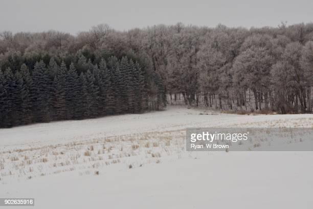 White Landscapes, farm field