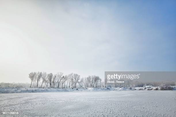white landscapes - frozen lake with ice patterns and trees in winter. - robb reece stock-fotos und bilder