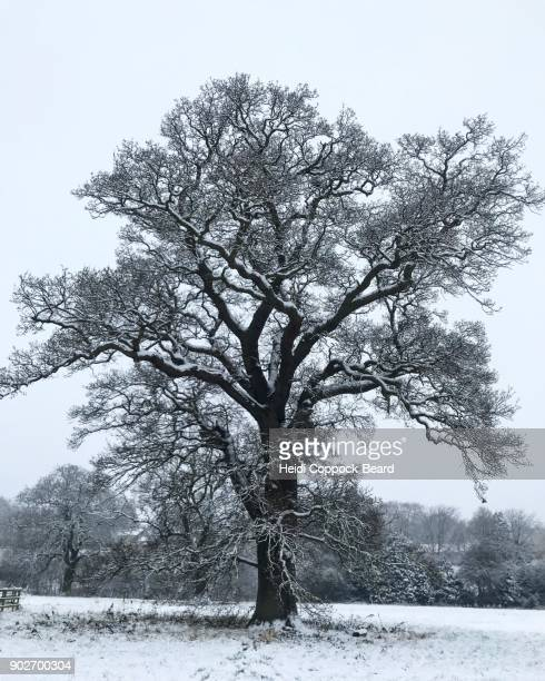 white landscapes - heidi coppock beard stock pictures, royalty-free photos & images