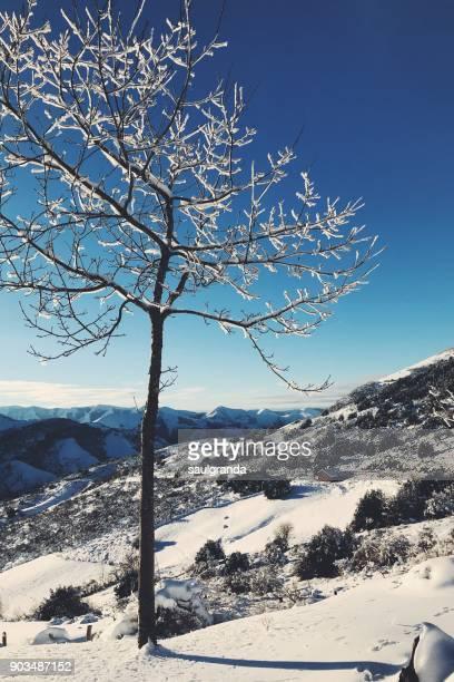 white landscapes - eu gipfel stock-fotos und bilder