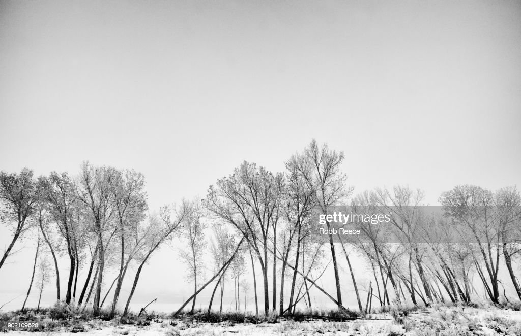 White Landscapes  - White Landscapes - Frozen lake with ice patterns and trees in winter. : Stock Photo