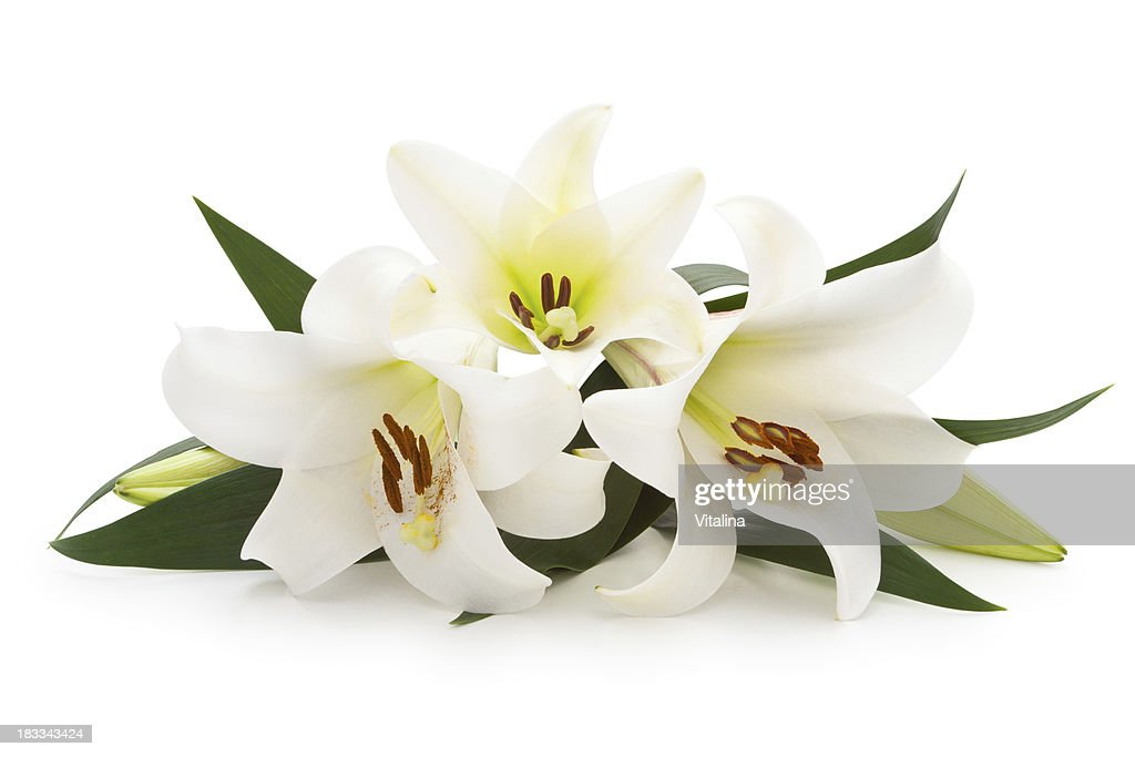 free white lily images  pictures  and royalty free stock photos freeimages com digital camera clipart png digital movie camera clipart