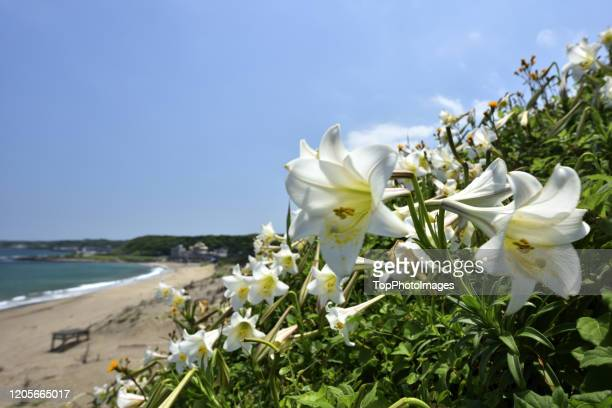 white lily against sky shihmen
