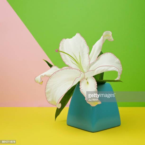 White Lily Flower in Blue Vase