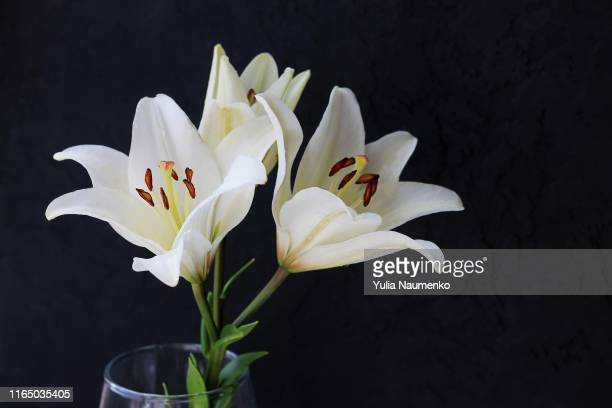 white lily flowers bouquet on black background. condolence card concept. close-up, copyspase. - mourning stock photos and pictures