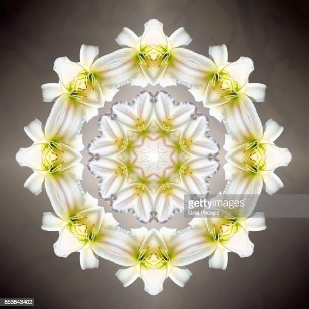White lily kaleidoscope