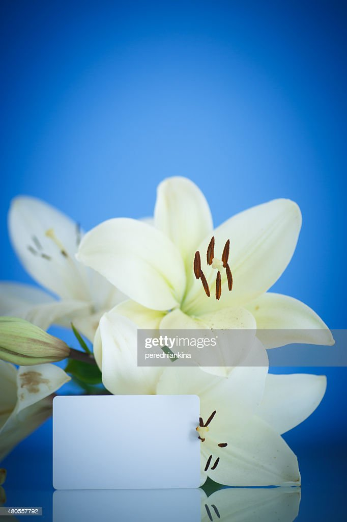 white Lily : Stock Photo
