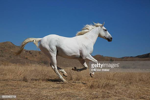 white male horse in desert landscape - horse stock pictures, royalty-free photos & images