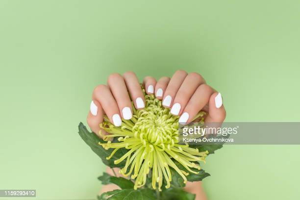 white manicure with flower on green background - fingernail stock pictures, royalty-free photos & images
