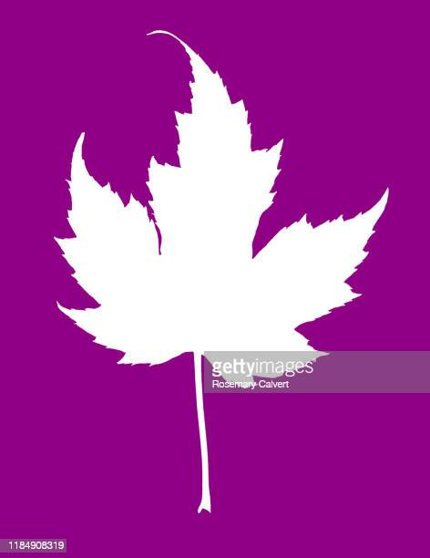 white maple leaf shape on pinkish purple background. - digital enhancement stock pictures, royalty-free photos & images