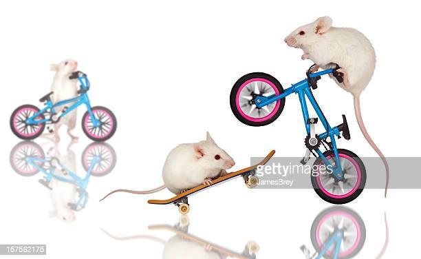 White Mice Daredevils Preform Stunts, Tricks on Bicycle, Skateboard
