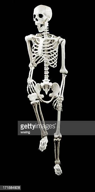 modelo esqueleto blanco con fondo negro - esqueleto humano fotografías e imágenes de stock