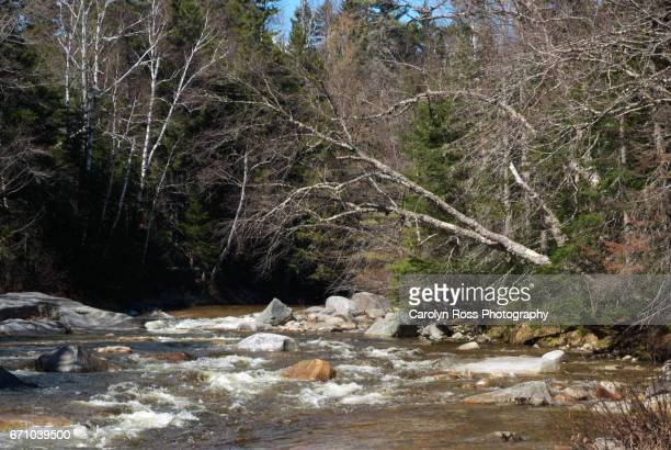 white mountain national forest. - carolyn ross stock pictures, royalty-free photos & images