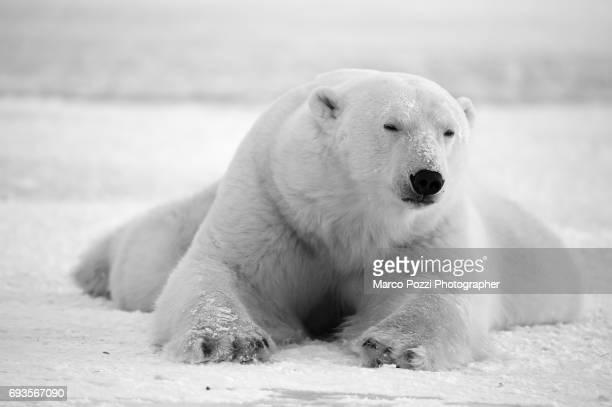 white mountain - bianco e nero stock pictures, royalty-free photos & images