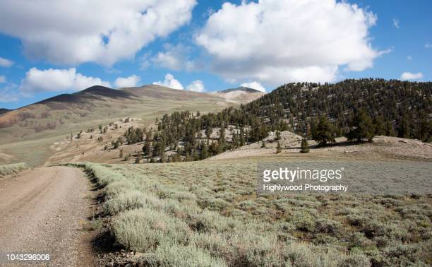 white mountain wandering - highlywood stock photos and pictures