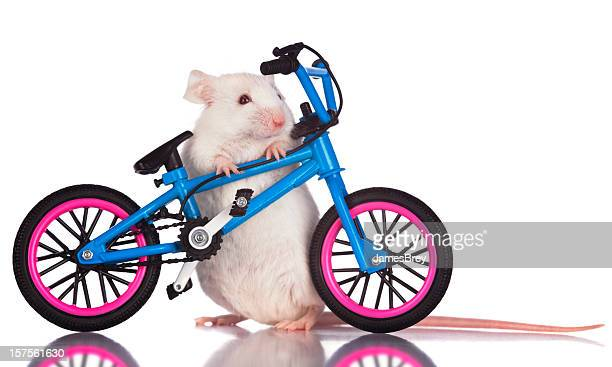 White Mouse Stunt Rider Posing With Bicycle