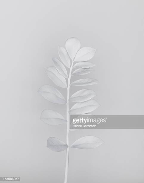 White nature