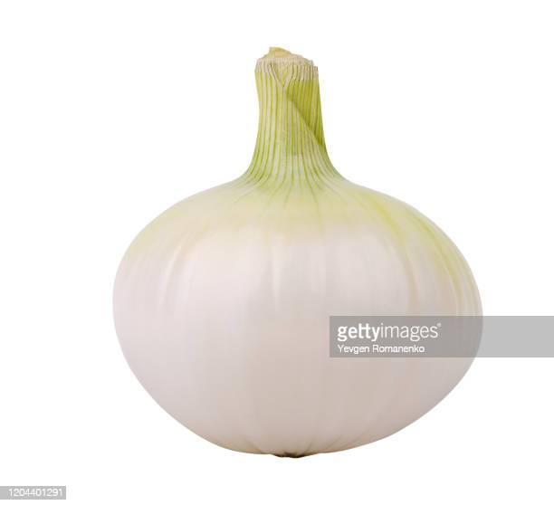 white onion isolated against white background - cebolla fotografías e imágenes de stock