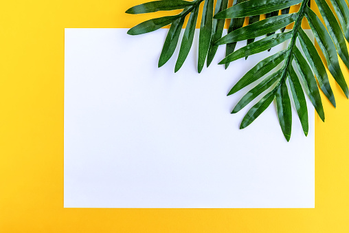 White paper and Palm Leaves on Yellow Background Summer Concept - gettyimageskorea