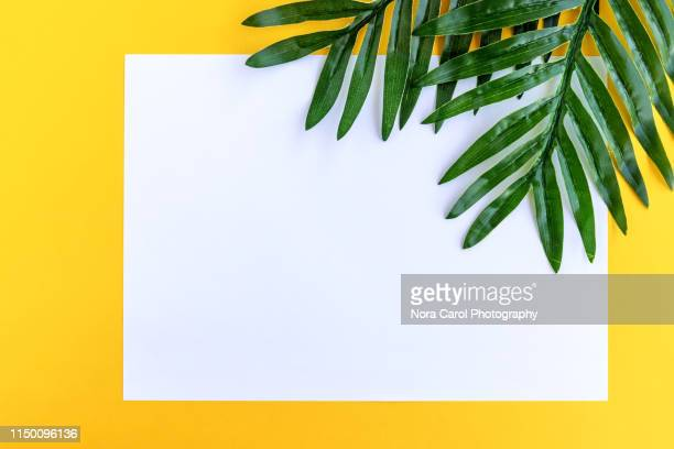 white paper and palm leaves on yellow background summer concept - motif tropical photos et images de collection