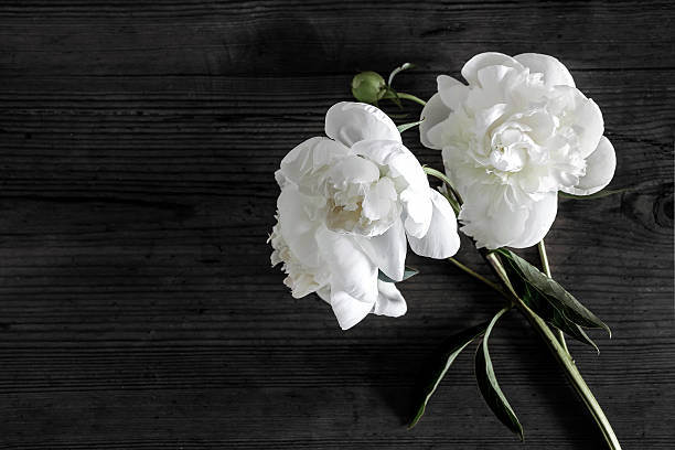 Free black white flower images pictures and royalty free stock white peony flowers in darkness mightylinksfo