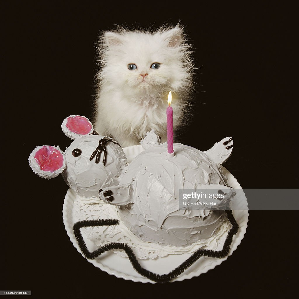 White Persian Kitten Behind Mouseshaped Birthday Cake Portrait Stock