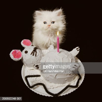 Admirable White Persian Kitten Behind Mouseshaped Birthday Cake Portrait Personalised Birthday Cards Sponlily Jamesorg
