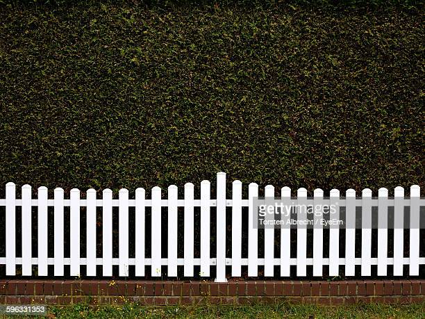 white picket fence against green ivy wall - hek stockfoto's en -beelden