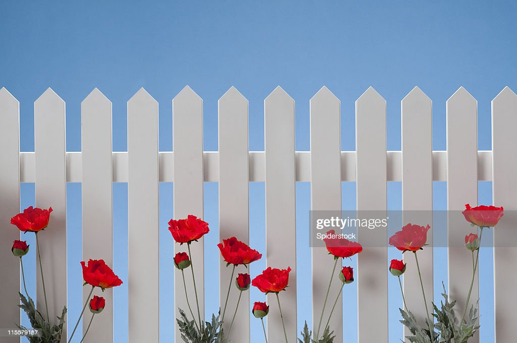 真っ白なペンキ塗りのフェンスに花 : ストックフォト