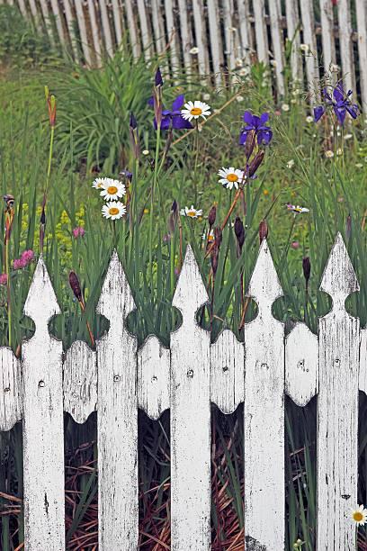 White picket fence with garden flowers vinalhaven island maine new white picket fence with garden flowers vinalhaven island maine new england usa mightylinksfo