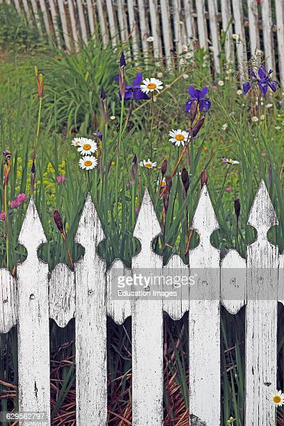 White picket fence with garden flowers Vinalhaven Island Maine New England USA