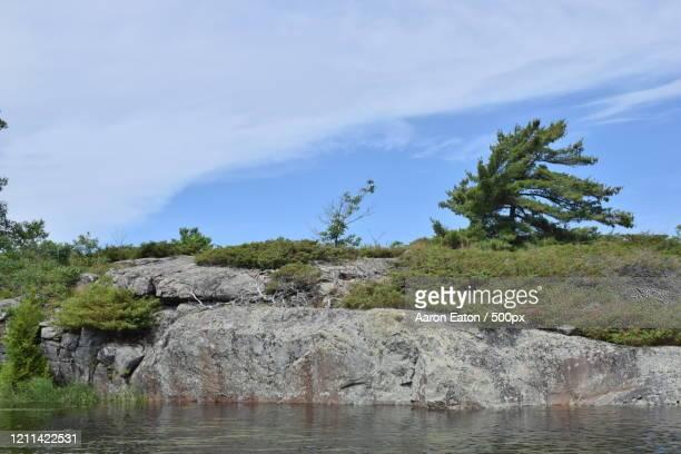 white pine (pinus strobus) on georgian bay, ontario, canada - eastern white pine stock pictures, royalty-free photos & images
