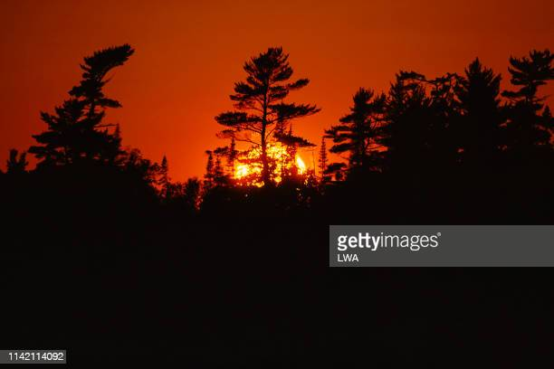 white pines at sunset - lake superior provincial park stock pictures, royalty-free photos & images