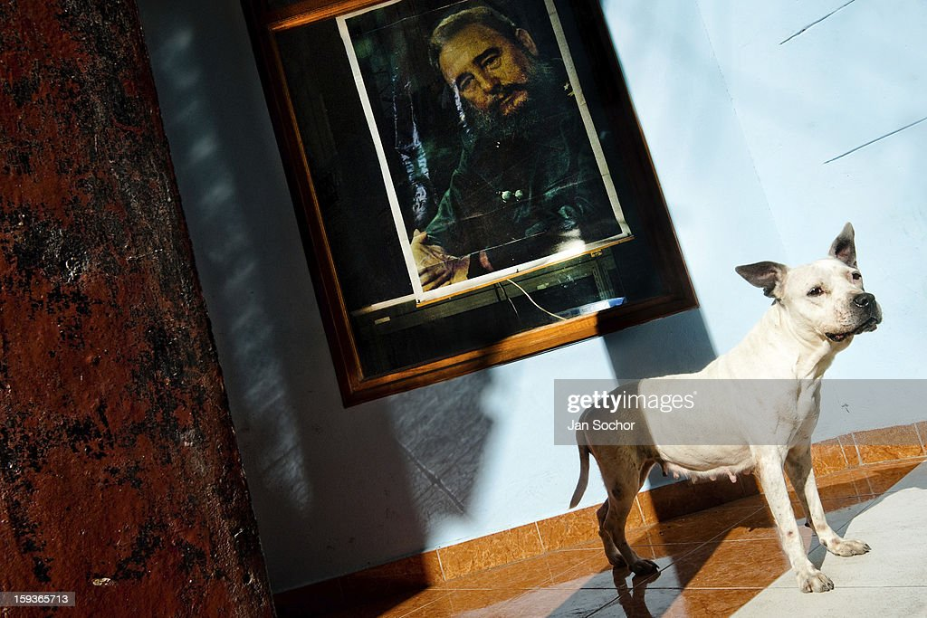 A white pit bull terrier stands in front of a portrait of the Revolutionary leader Fidel Castro, hung on the wall in Havana, Cuba, 13 February 2009 in Havana, Cuba. During the Cuban Revolution, an armed rebellion at the end of the 1950s, most of the revolutionary leaders started as unnamed soldiers fighting from the jungle. After taking over the power, they became autocratic rulers holding almost absolute power and pursuing the opposition. For some reason Cuban people never stopped to worship Fidel Castro, Che Guevara, Raul Castro and others. Cubans hang their photos and portraits on the wall at home, shops and working places even when they don't have to.