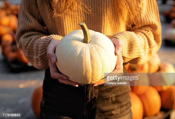 white pumpkin - riesenkürbis stock-fotos und bilder